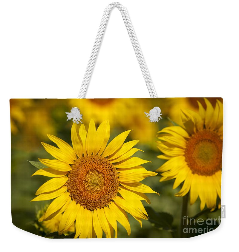 Bloom Weekender Tote Bag featuring the photograph Sunflowers by Brian Jannsen