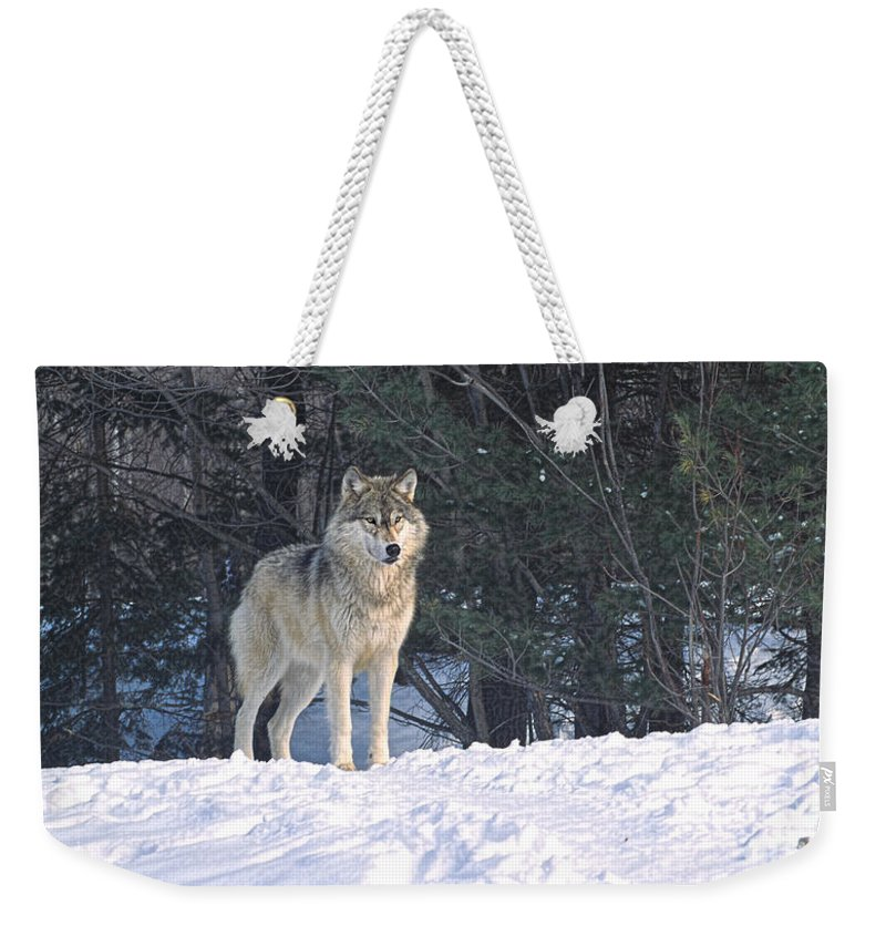 Timber Weekender Tote Bag featuring the photograph Timber Wolf by Les Palenik