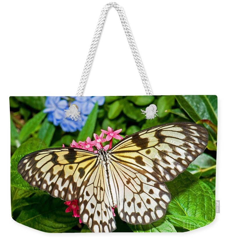Nature Weekender Tote Bag featuring the photograph Tree Nymph Butterfly by Millard H. Sharp