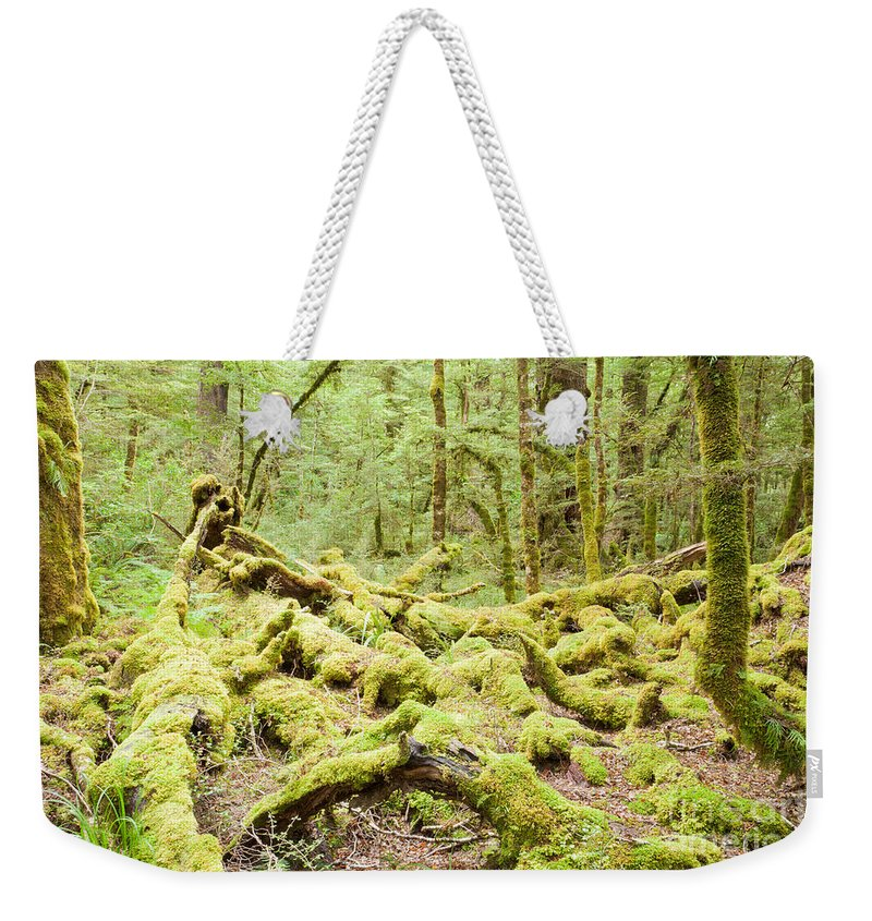 South Island Weekender Tote Bag featuring the photograph Virgin Rainforest Wilderness Of Fiordland Np Nz by Stephan Pietzko