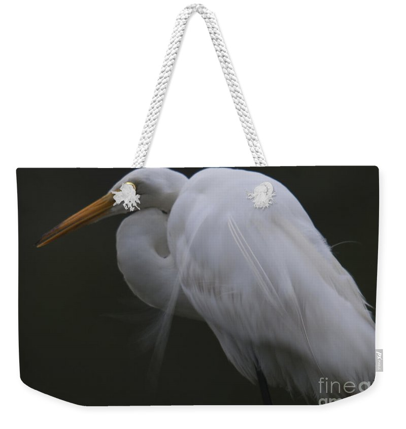 White Heron Weekender Tote Bag featuring the photograph White Heron Portrait by Dale Powell