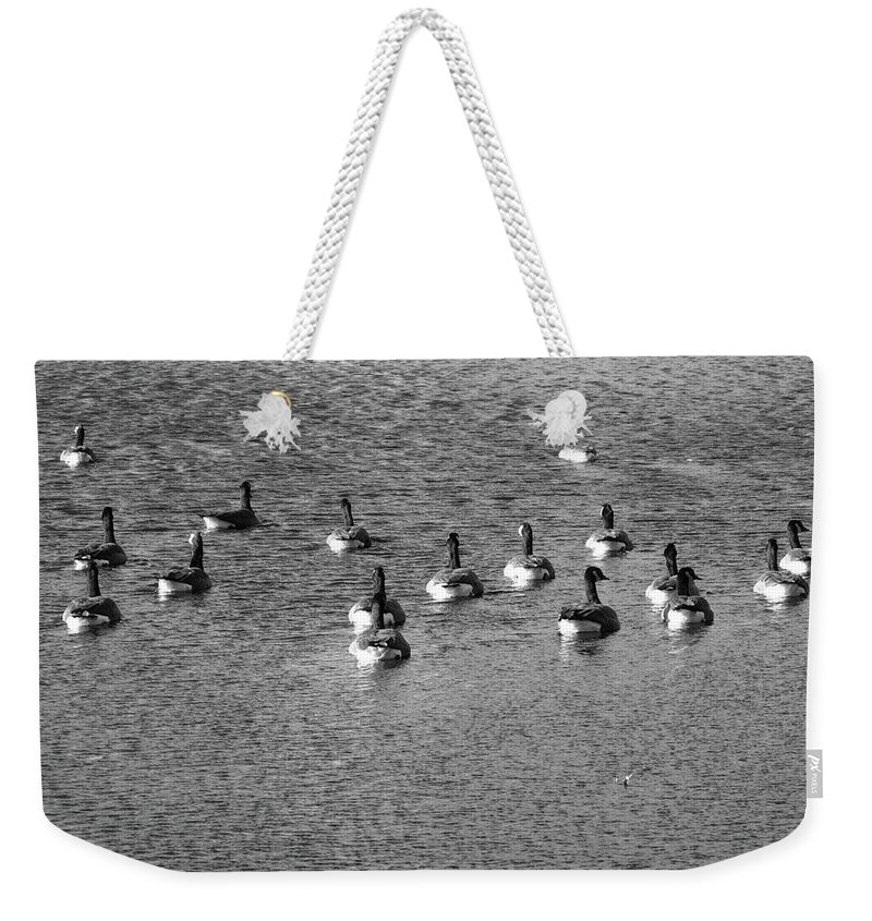 Animals Weekender Tote Bag featuring the photograph Wild Birds And Pond by Frank Romeo