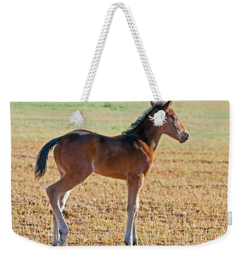 Nature Weekender Tote Bag featuring the photograph Wild Horse Foal by Millard H. Sharp