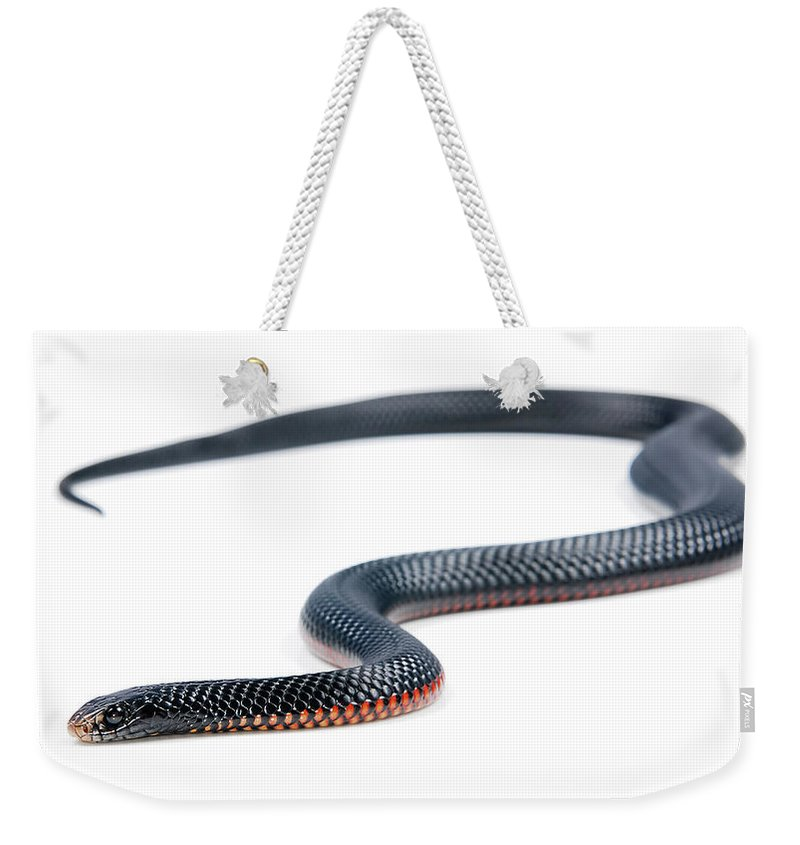 Animal Weekender Tote Bag featuring the photograph Australian Reptiles On White by Shannon Benson