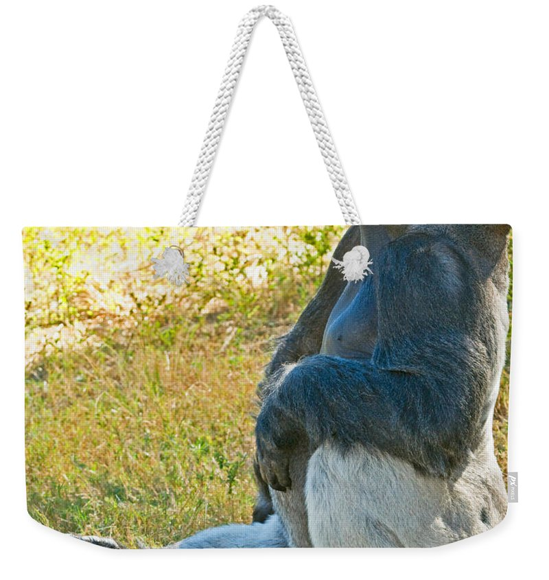 Nature Weekender Tote Bag featuring the photograph Western Lowland Gorilla by Millard H. Sharp