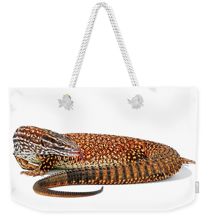 Acanthurus Weekender Tote Bag featuring the photograph Australian Reptiles On White by Shannon Benson