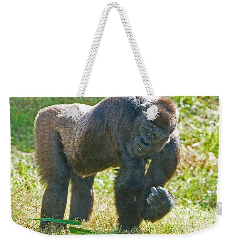 Western Lowland Gorilla Weekender Tote Bag featuring the photograph Western Lowland Gorilla by Millard H. Sharp