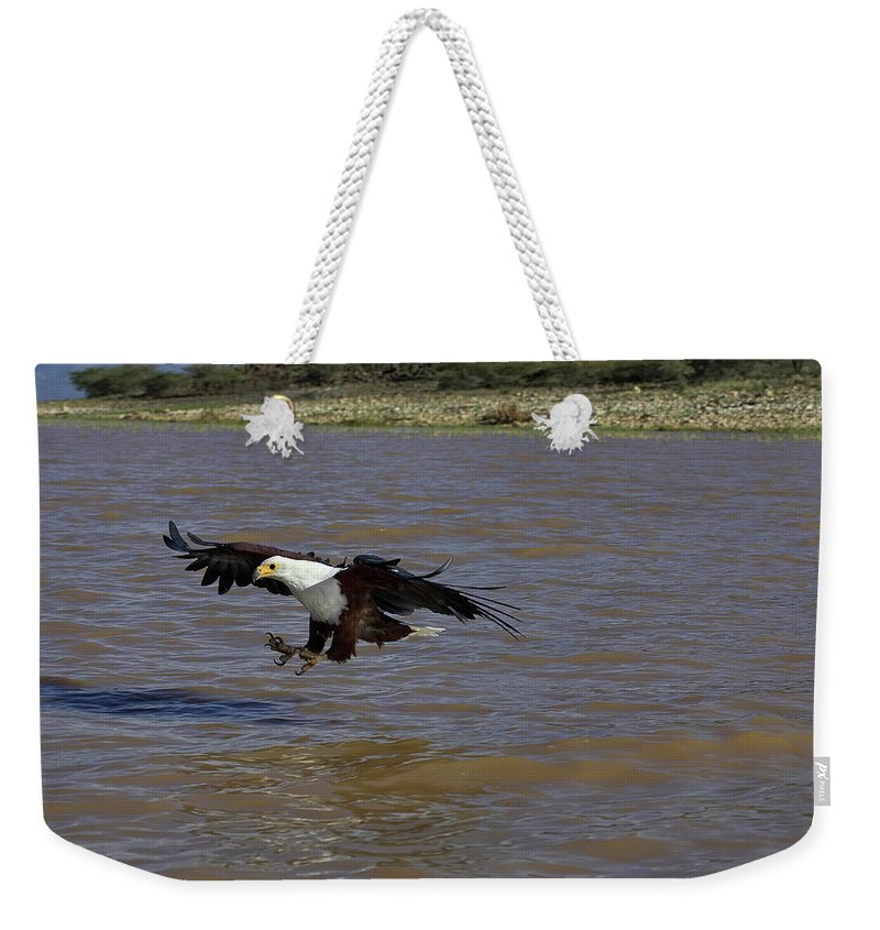 Accipitridae Weekender Tote Bag featuring the photograph Aigle Pecheur Dafrique Haliaeetus by Gerard Lacz