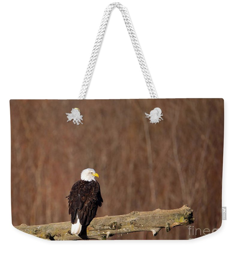 Eagle Weekender Tote Bag featuring the photograph Bald Eagle by Paul Fell