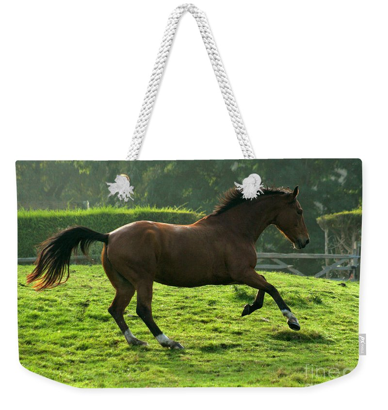 Horse Weekender Tote Bag featuring the photograph Bay Horse by Angel Ciesniarska