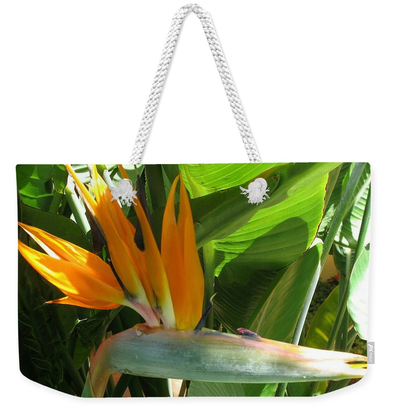 Bird Of Paradise Weekender Tote Bag featuring the photograph Bird Of Paradise by Christiane Schulze Art And Photography