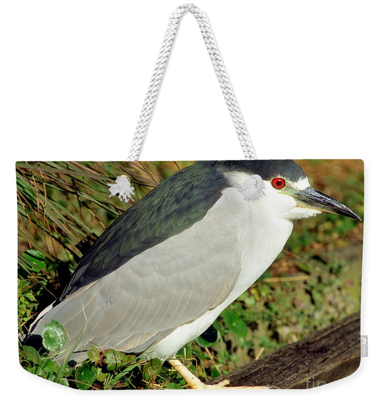 Animal Weekender Tote Bag featuring the photograph Black-crowned Night-heron by Millard H. Sharp
