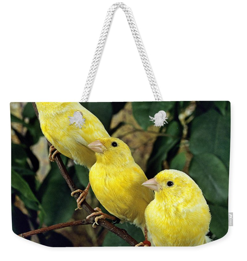 Adult Weekender Tote Bag featuring the photograph Canari Jaune by Gerard Lacz