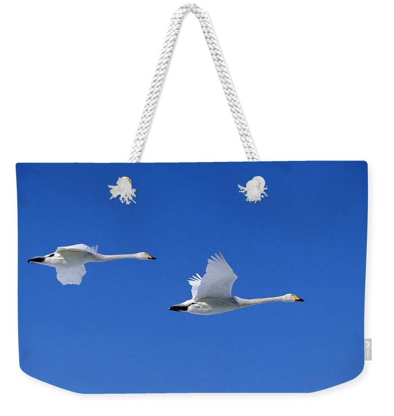 Adult Weekender Tote Bag featuring the photograph Cygne Chanteur Cygnus Cygnus by Gerard Lacz