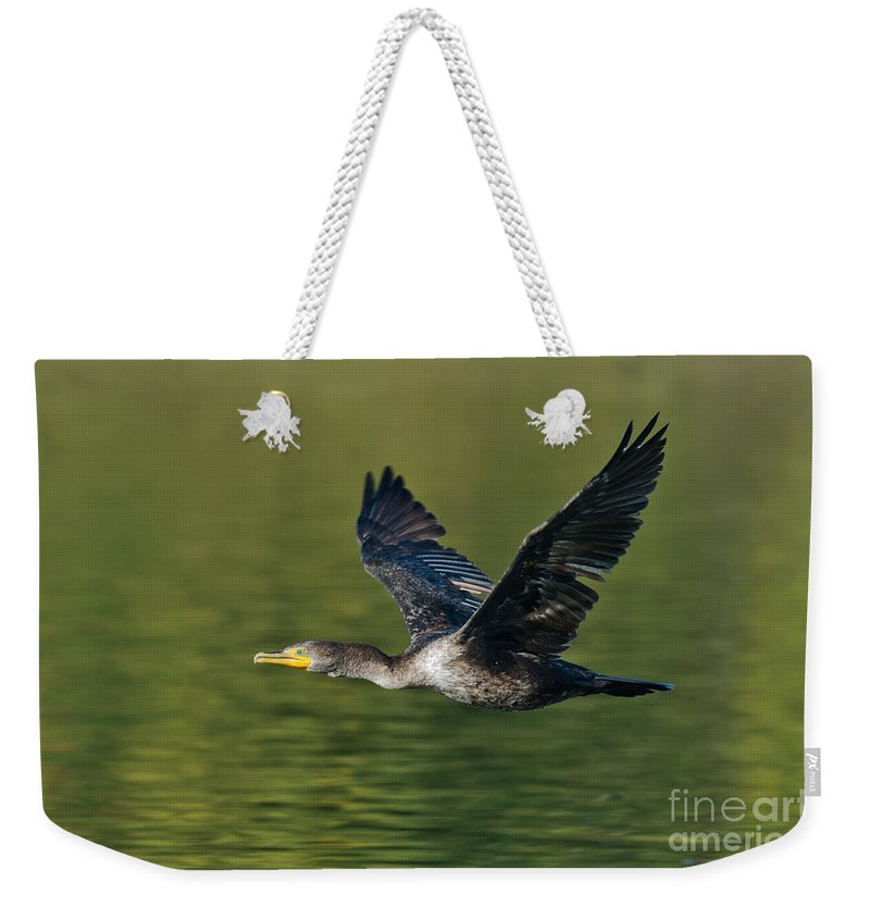 Fauna Weekender Tote Bag featuring the photograph Double Crested Cormorant by Anthony Mercieca