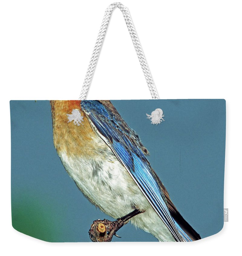 Bluebird Weekender Tote Bag featuring the photograph Eastern Bluebird by Millard H. Sharp