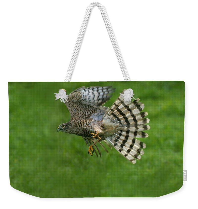 Accipiter Nisus Weekender Tote Bag featuring the photograph Epervier Deurope Accipiter Nisus by Gerard Lacz