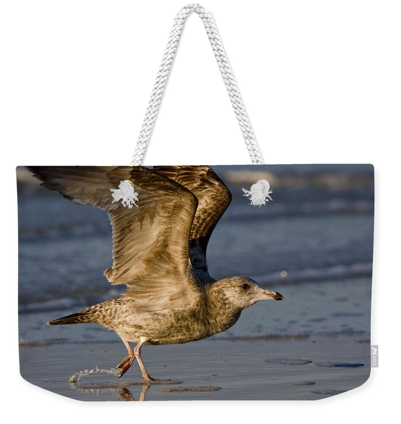 Gull Weekender Tote Bag featuring the photograph Gull by Sandy Swanson