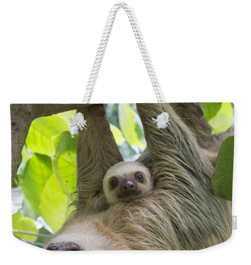 Suzi Eszterhas Weekender Tote Bag featuring the photograph Hoffmanns Two-toed Sloth And Old Baby by Suzi Eszterhas