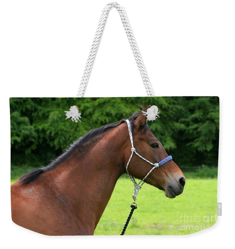 Bay Horse Weekender Tote Bag featuring the photograph Horse Portrait by Angel Ciesniarska