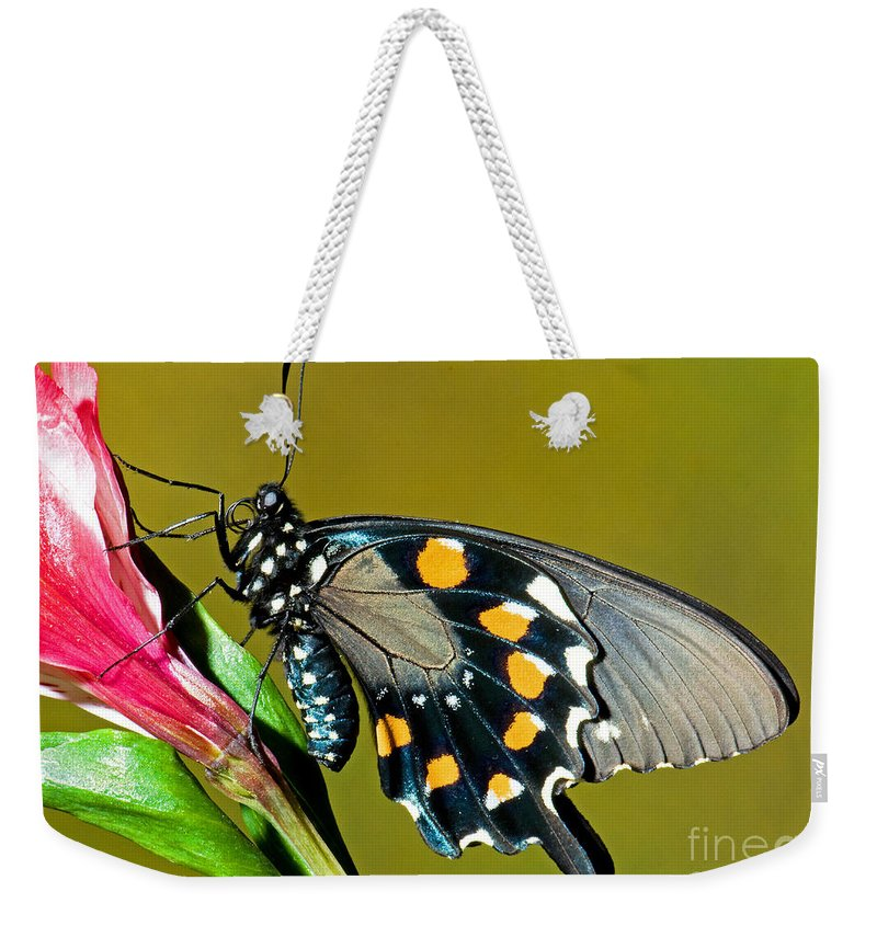 Nature Weekender Tote Bag featuring the photograph Pipevine Swallowtail Butterfly by Millard H. Sharp