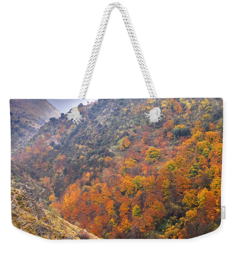Trees Weekender Tote Bag featuring the photograph Rainy Days by Guido Montanes Castillo
