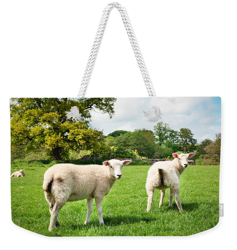 Agriculture Weekender Tote Bag featuring the photograph Sheep In Field by Tom Gowanlock