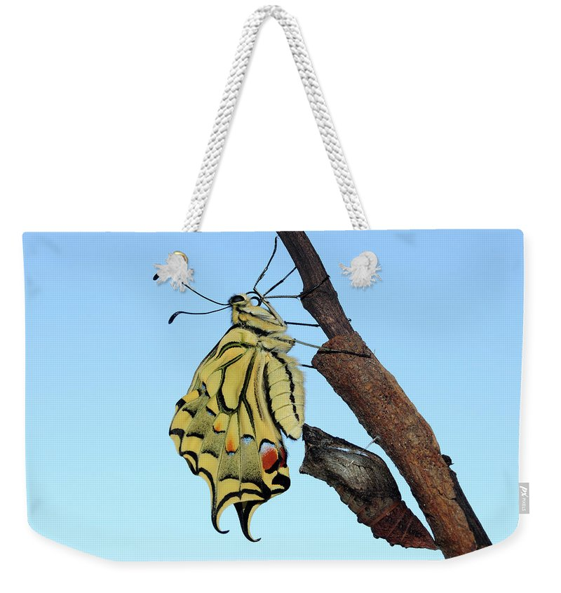 Nature Weekender Tote Bag featuring the photograph Stock Images Of Galicia by Marcos Veiga