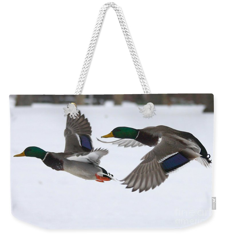 The Great Race Weekender Tote Bag featuring the photograph The Great Race by John Telfer