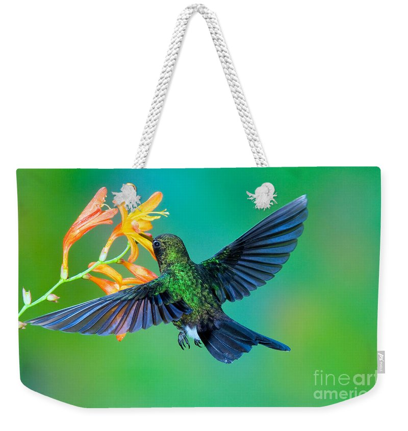 Animal Weekender Tote Bag featuring the photograph Tourmaline Sunangel by Anthony Mercieca