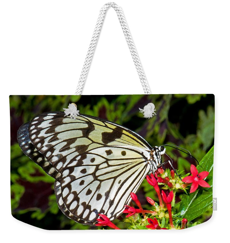 Wildlife Weekender Tote Bag featuring the photograph Tree Nymph Butterfly by Millard H. Sharp