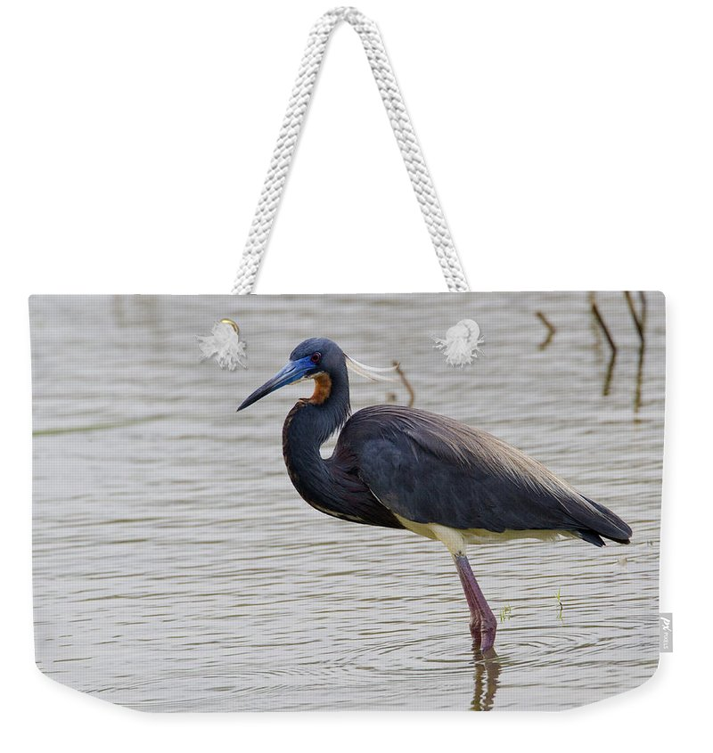 Doug Lloyd Weekender Tote Bag featuring the photograph Tricolored Heron by Doug Lloyd