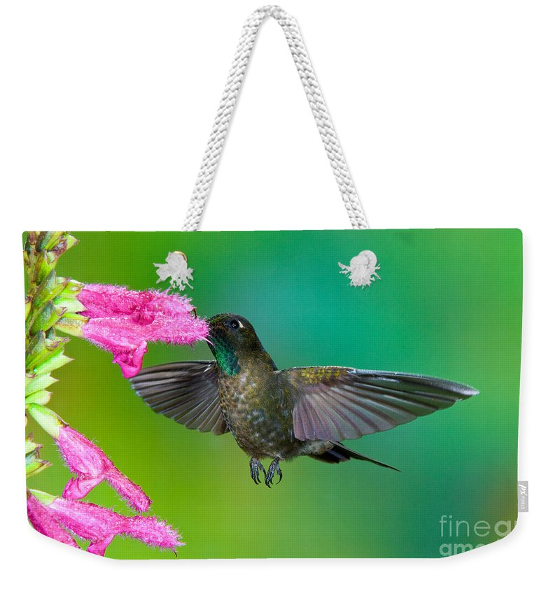 Animal Weekender Tote Bag featuring the photograph Tyrian Metaltail by Anthony Mercieca