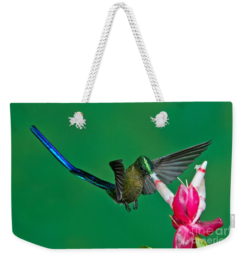 Violet-tailed Sylph Weekender Tote Bag featuring the photograph Violet-tailed Sylph by Anthony Mercieca