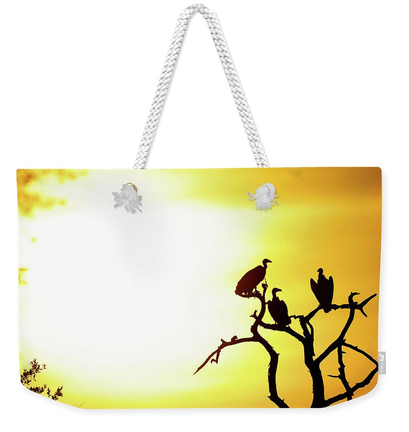 Africa Weekender Tote Bag featuring the photograph African Birds by Shannon Benson