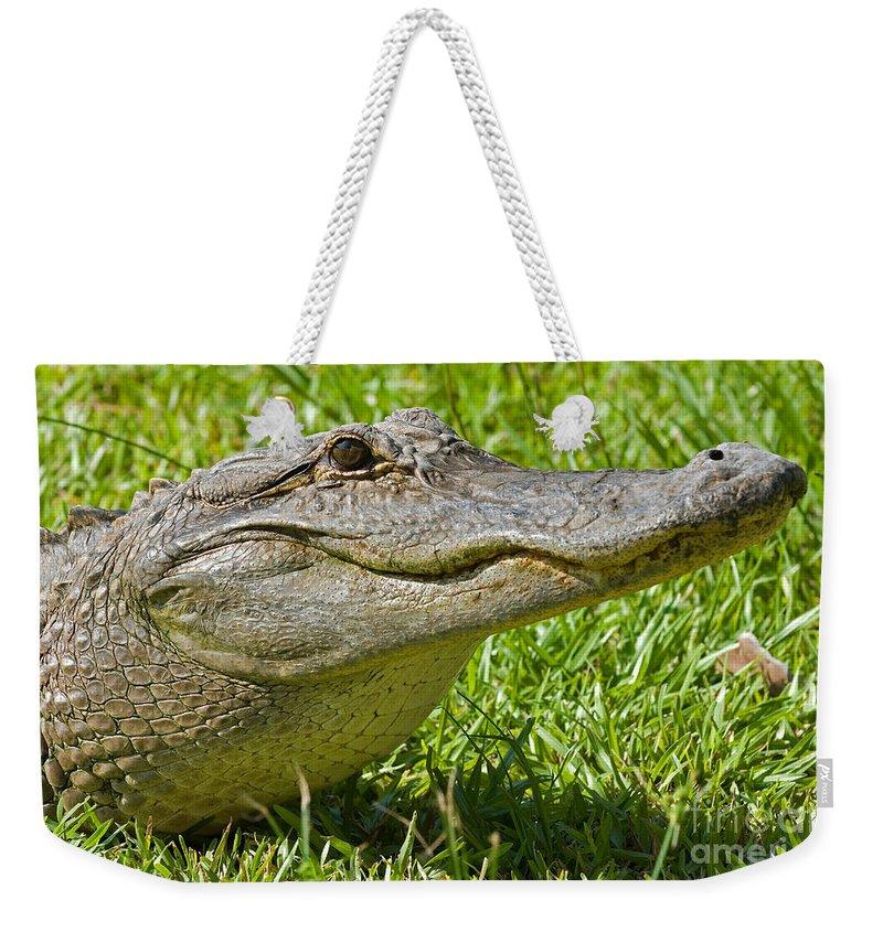 Animal Weekender Tote Bag featuring the photograph American Alligator by Millard H. Sharp