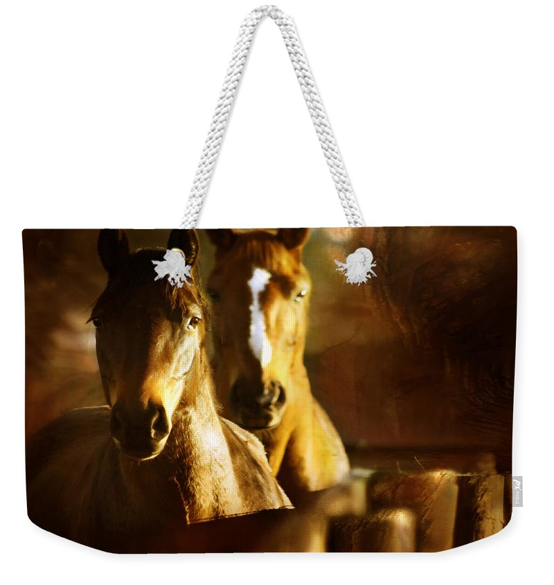 Autumn Weekender Tote Bag featuring the photograph Autumn Colors by Angel Ciesniarska