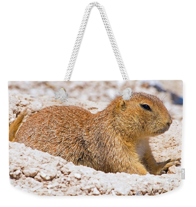 Nature Weekender Tote Bag featuring the photograph Black Tail Prairie Dog by Millard H. Sharp