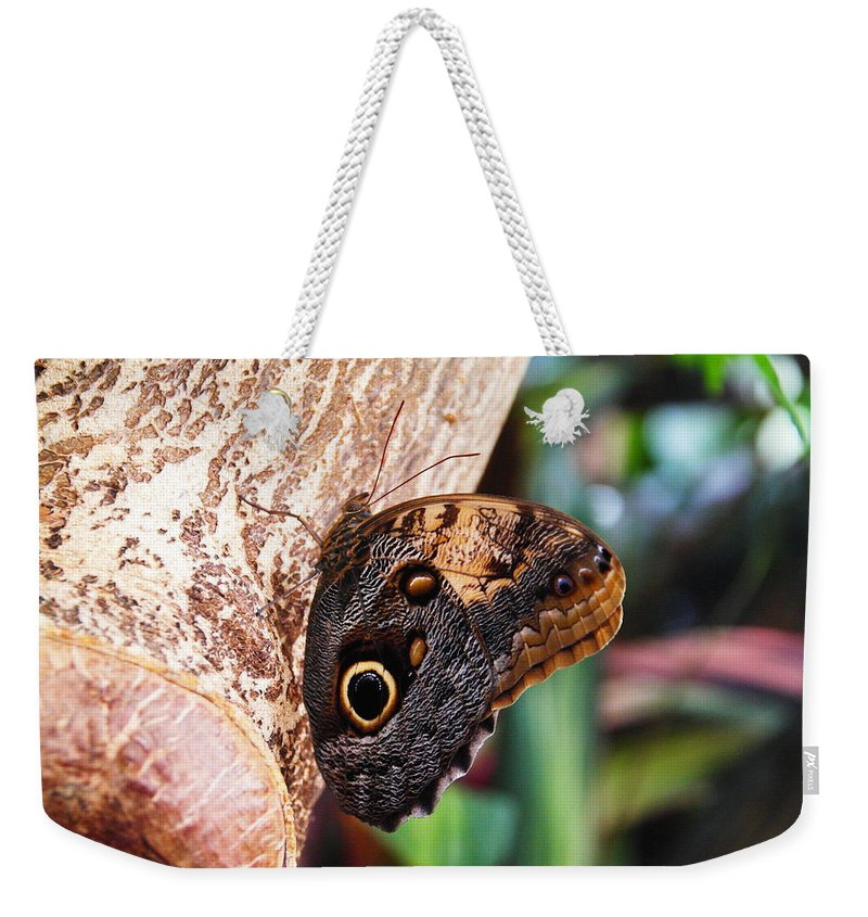 Butterfly Weekender Tote Bag featuring the photograph Butterfly by Jeff Swan