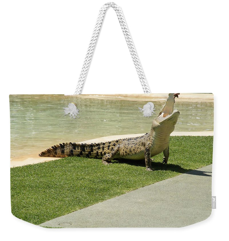 Australia Queensland Qld Weekender Tote Bag featuring the digital art Crocodile by Carol Ailles