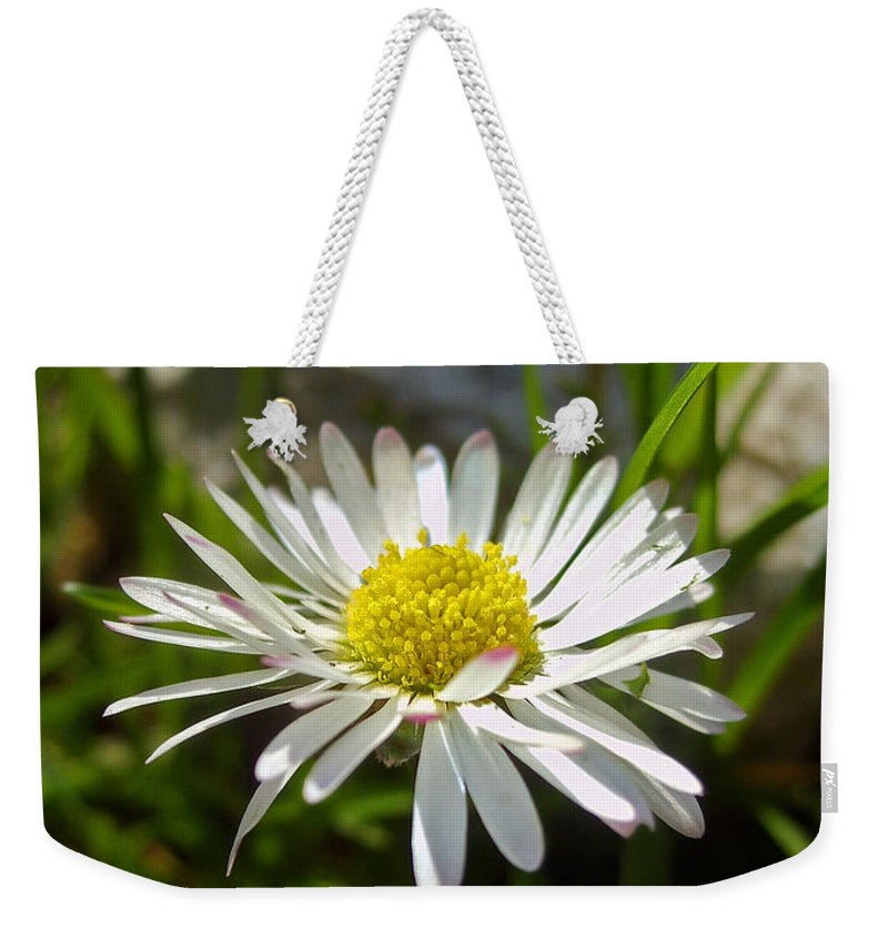 Daisy Weekender Tote Bag featuring the photograph Daisy by Nina Ficur Feenan
