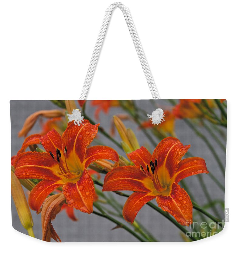 Day Lilly Weekender Tote Bag featuring the photograph Day Lilly by William Norton