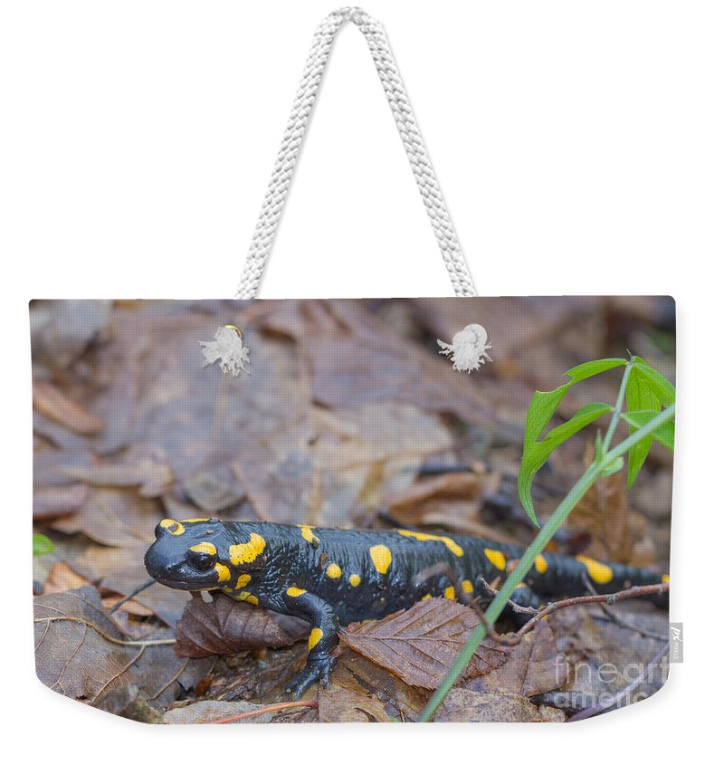 Bulgaria Weekender Tote Bag featuring the photograph Fire Salamander by Jivko Nakev