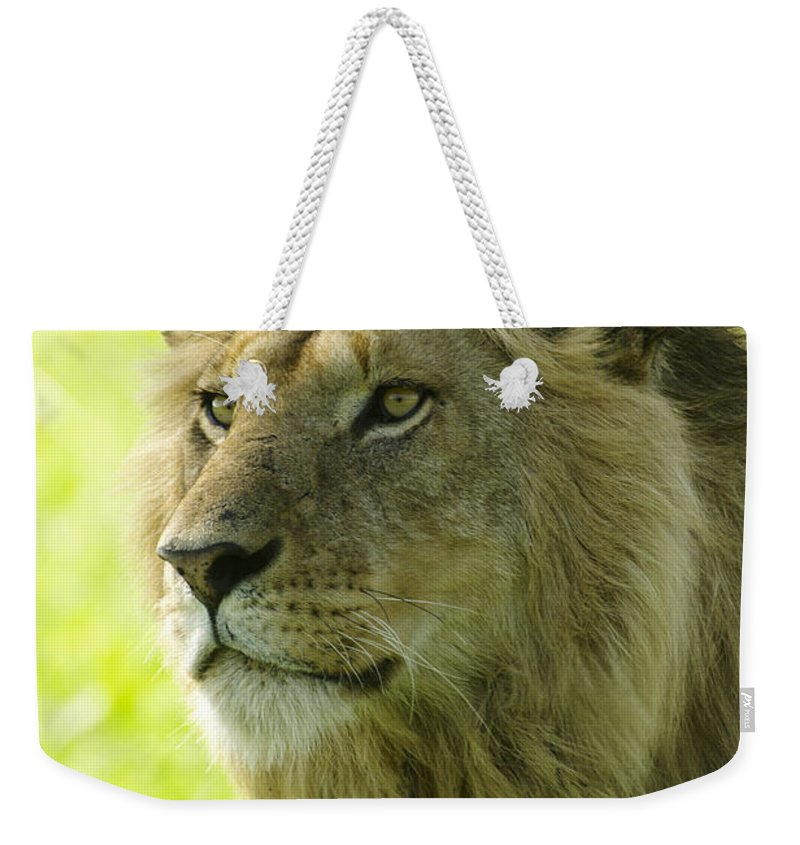 Lion Weekender Tote Bag featuring the photograph Golden Boy by Michele Burgess