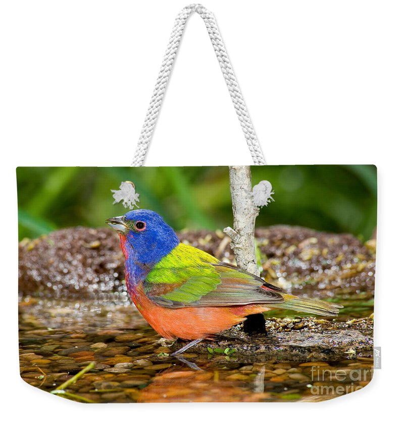 Fauna Weekender Tote Bag featuring the photograph Painted Bunting by Anthony Mercieca
