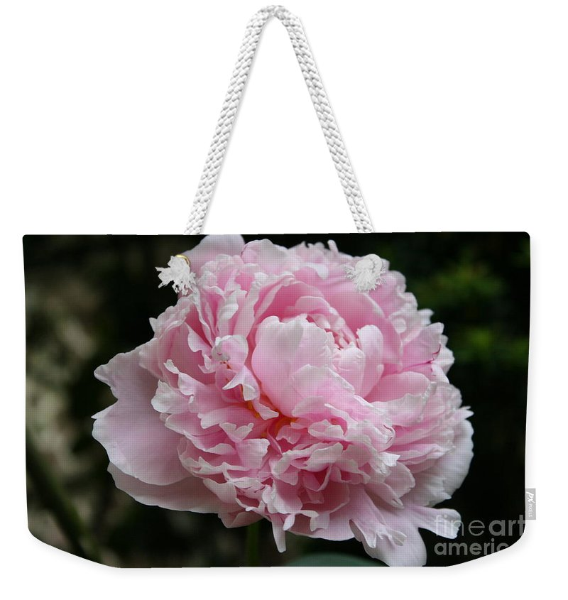 Peonies Weekender Tote Bag featuring the photograph Pink Peony by Christiane Schulze Art And Photography
