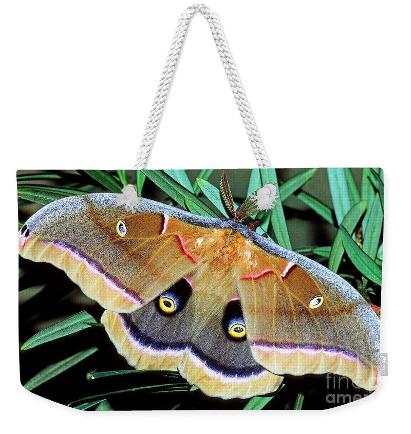 Polyphemus Moth Weekender Tote Bag featuring the photograph Polyphemus Moth by Millard H. Sharp