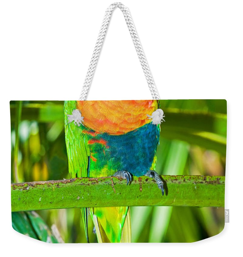 Nature Weekender Tote Bag featuring the photograph Rainbow Lorikeet by Millard H. Sharp
