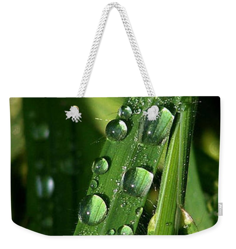 Rain Weekender Tote Bag featuring the photograph Raindrops by Carol Lynch