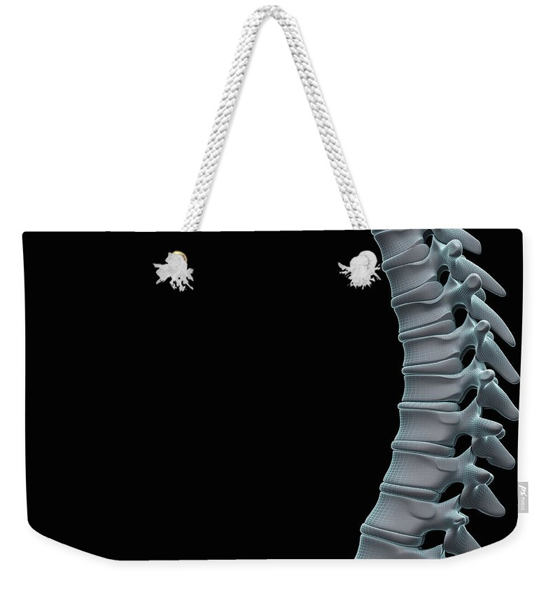Close-up Weekender Tote Bag featuring the photograph Spinal Anatomy by Science Picture Co